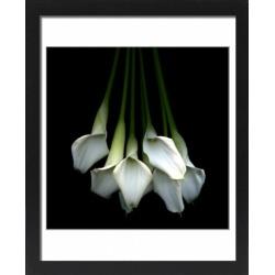 Large Framed Photo. Callas flower